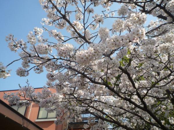 春ですね~!!(畑中)